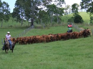 Mustering 2011